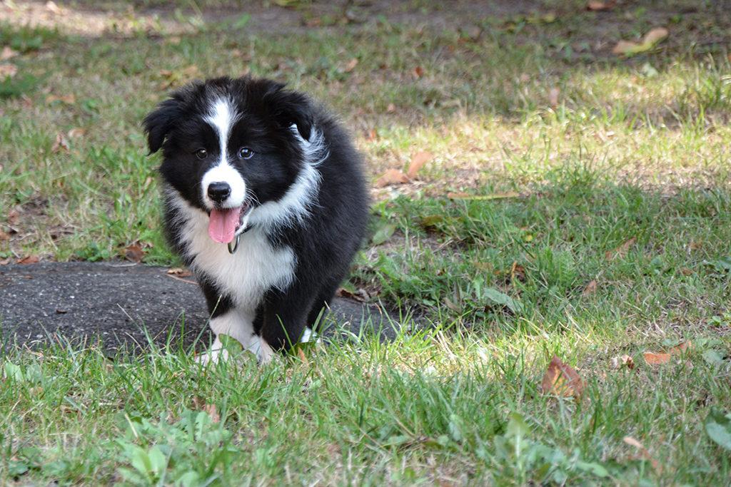 Die Arbeit als Hundetrainerin hat Existenzgründerin Heike Biebrach neu für sich entdeckt