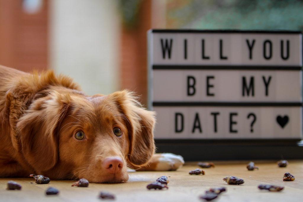 Ehrliches Feedback und Antworten auf Eure Fragen: Beim Speed-Dating auf dem Gründertag gibt es all das und noch viel mehr.